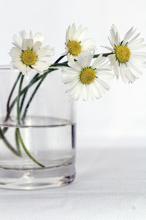 flowers-646637_960_720